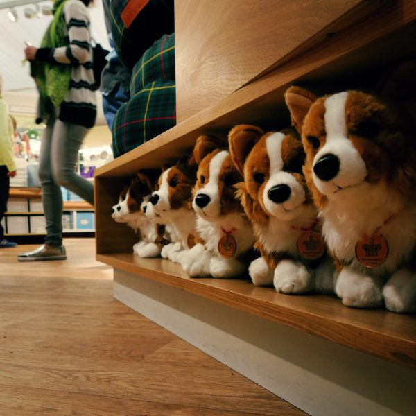 Corgis looking for a new home at the Palace Shop