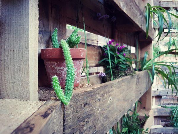Avant-Garden